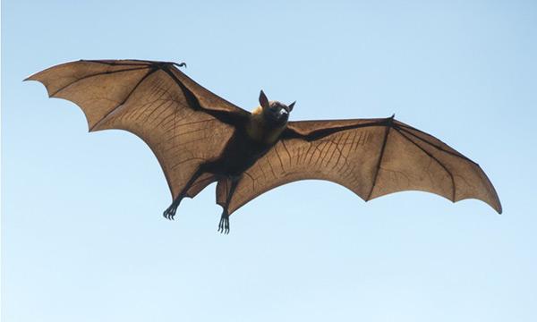 GRWTH社區, 停課不停學, 紙飛機, 蝙蝠紙飛機, 藝術本子,