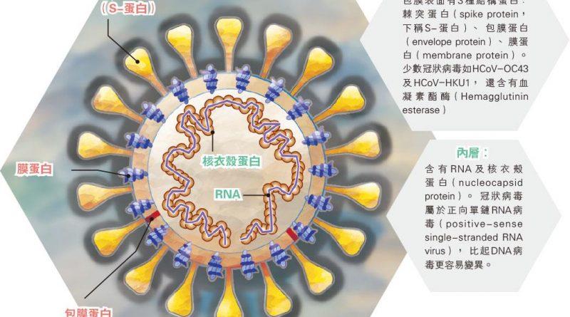 【冠狀病毒大解構】SARS、MERS、COVID-19黐宿主受體入侵