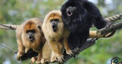 [停課不停學] 內置擴音器的吼猴 (自然科學篇)