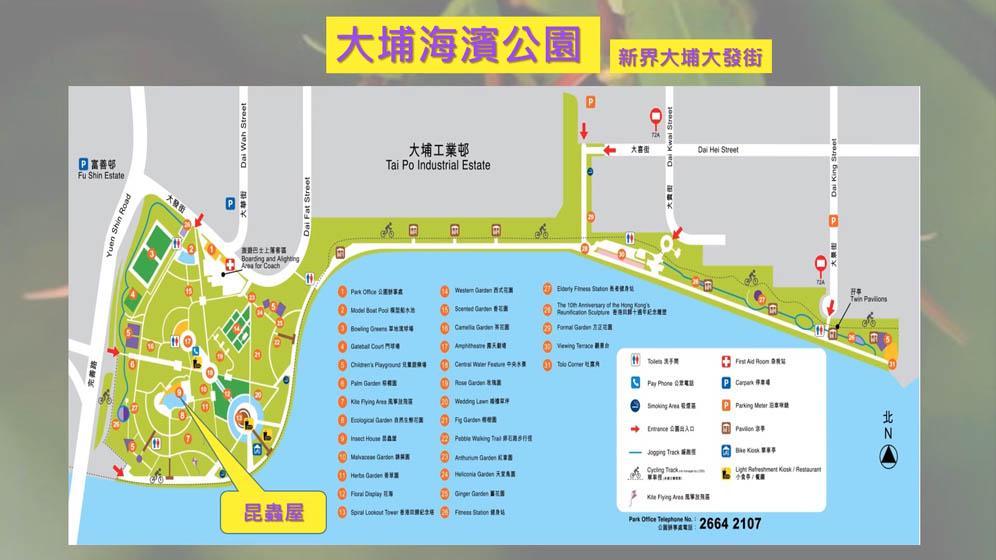 水石榕初夏開花 康文署4公園觀賞開花美態