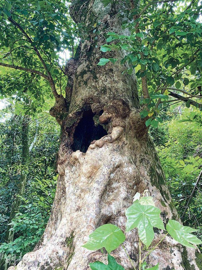 【行山郊遊】印洲塘之旅 漫步林間賞海岸