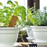 【有機種植】自家種香草 安心吃落肚