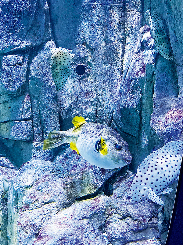 【Stacey打卡攻略】城市水族館設觸摸池 親子遊好去處