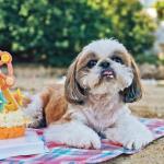 【寵物蛋糕】自助烘焙DIY寵物蛋糕 食材多變毛孩舔舔脷