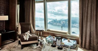 【寵物嘆世界】守護毛孩wellbeing 欣賞超靚海景 享受奢華住宿之旅|關心寵物健康 補充不同營養需要