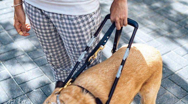 當你遇見導盲犬 記住「三不一問」 忌撫摸餵食