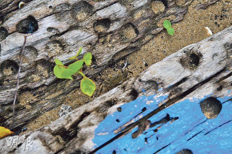 備兩支鏡頭 調準角度 欣澳木塘沙洲 捕捉美麗時刻