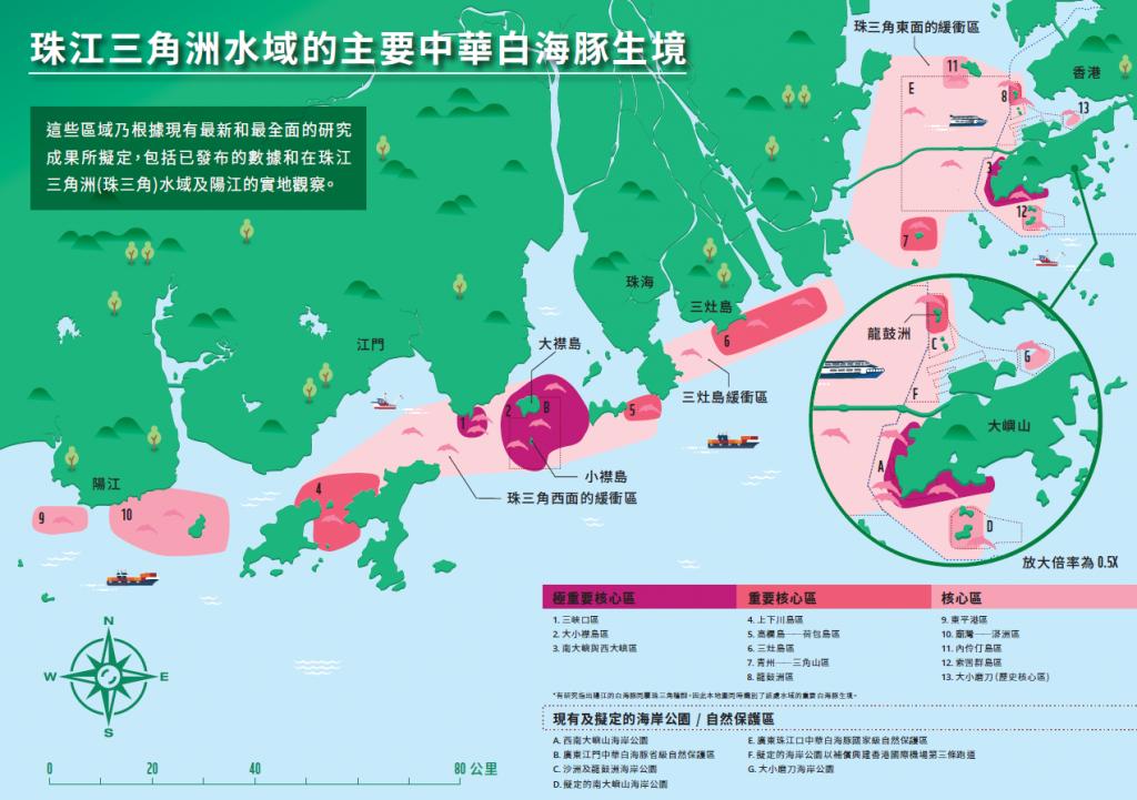 中華白海豚出沒較疫情前增30% 為什麼?