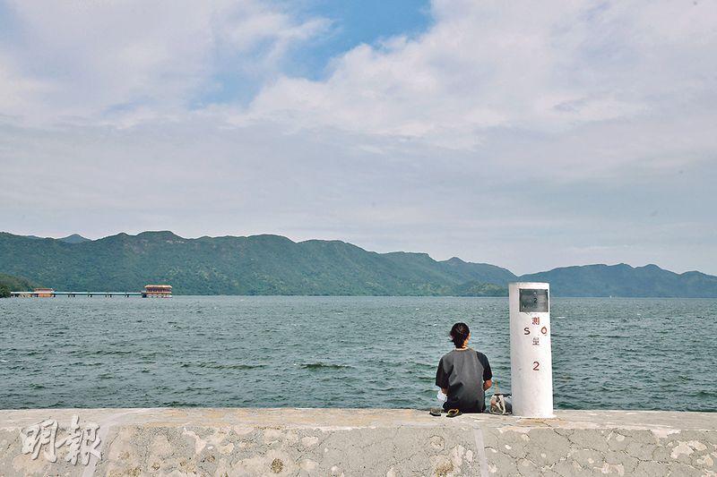【周末放電:自駕遊推介】大埔至鹿頸行山看海 探羊駝賞花海風車 處處打卡位