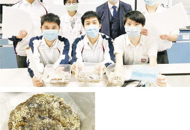 超級麥皮蟲是什麼?可消化塑膠? 初中生由外賣盒啟發