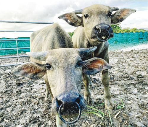 非一般「保育員」 環保水牛 行行企企救地球