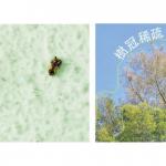 救救榕樹!5招觀察分辨蟲蟲噬咬痕跡