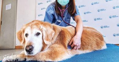 寵物也睇中醫 貓狗年老多病 針灸調理