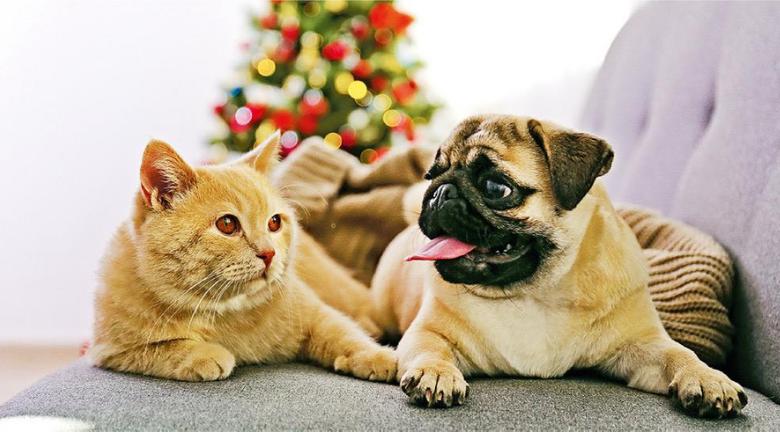 寵物健康知多啲|健康毛孩唔使著衫保暖 蜷縮打顫調節體溫