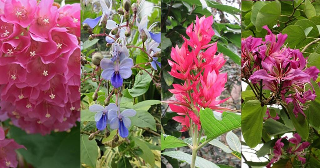 走入動植物公園賞花去!吊芙蓉、赤苞花、鳶尾、洋紫荊點樣分?