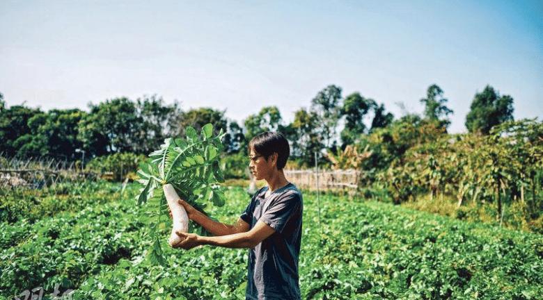 食養料理丨DIY食養蘿蔔糕 加薑胡椒粉中和陰性