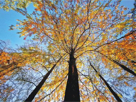 3招影紅葉 巧妙角度取景 黑暗突出紅葉