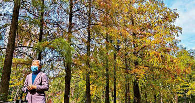 香港點止得紅葉?遊巴士河睇奇樹 有百年樹木仲有人面古木?