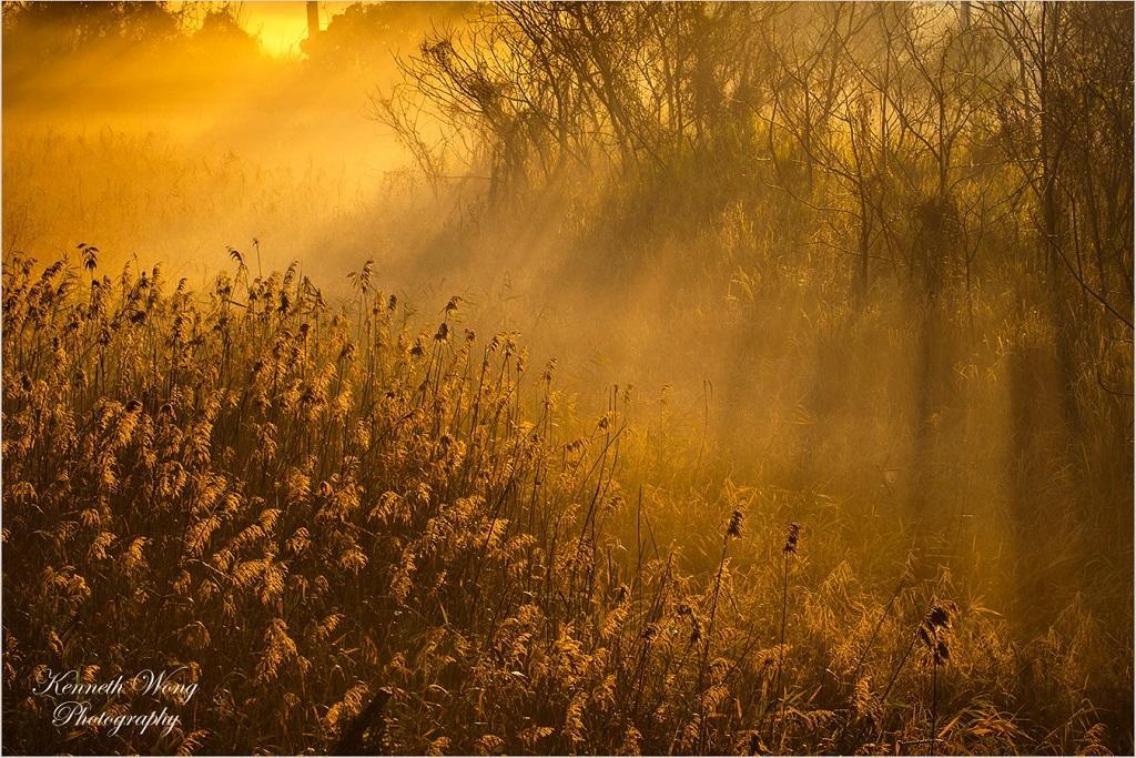 【輻射霧】網友年初一南生圍遇仙境 天文台話你知:輻射霧冬春季日出時分出現(多圖)
