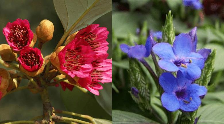 【多圖】周末好去處 動植物公園賞花去!2月之花爭相競艷
