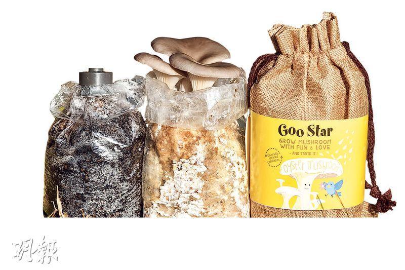 咖啡渣工程?木屑都可以種菇?平民蠔菇易培植鮮味重 拌飯、意粉煮法多