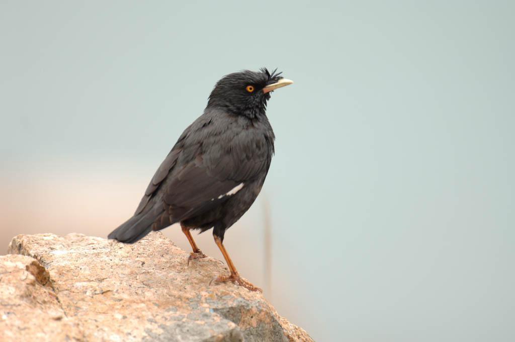 鳥語知多少?知唔知咩雀叫聲係「咕姑固」?漁護署、觀鳥會拍片教你憑聲識鳥(附12種雀鳥叫聲任你聽)
