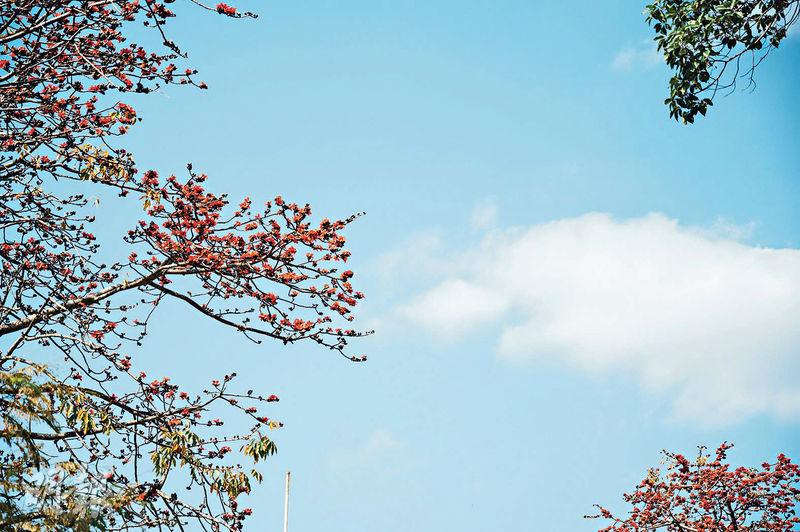 周末好去處丨巴士一日遊 上大帽山賞櫻花 遊石崗紅棉夾道 探索七彩壁畫村