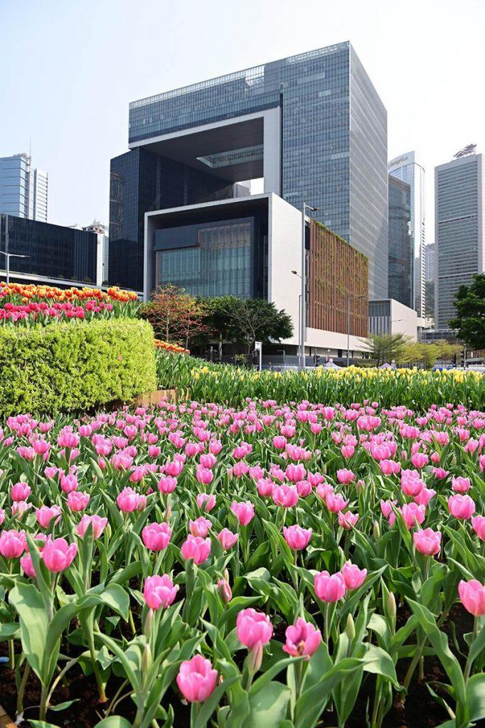 【花展2021】多圖!18區花圃各有特色 走入繽紛童話國度 鴨脷洲賞櫻花