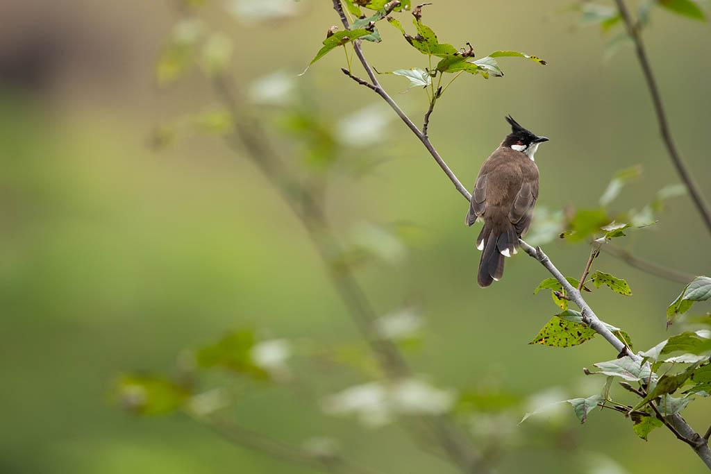 野生的雀出現了!觀鳥會教市區觀鳥最佳時間 3大注意事頂