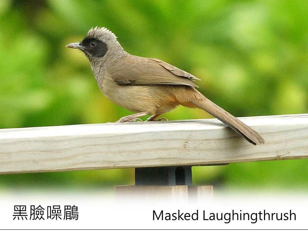 觀鳥入門丨春夏限定!濕地公園常見雀鳥你認得幾多隻?邊隻品種有粉紅色長腿?