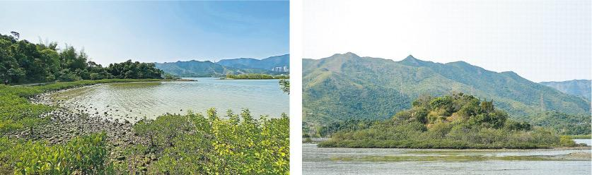 假日好去處丨烏蛟騰生態之旅 2.5個小時睇勻紅樹林、招潮蟹、彈塗魚 親親大自然