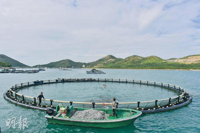 本地遊 賞你遊2.0 南.島漁樂文化遊 南丫島 鴨脷洲 旅行 雜貨店 避風塘