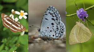 濕地公園賞蝶去!6月夏至期間限定 9種蝴蝶你見過未?