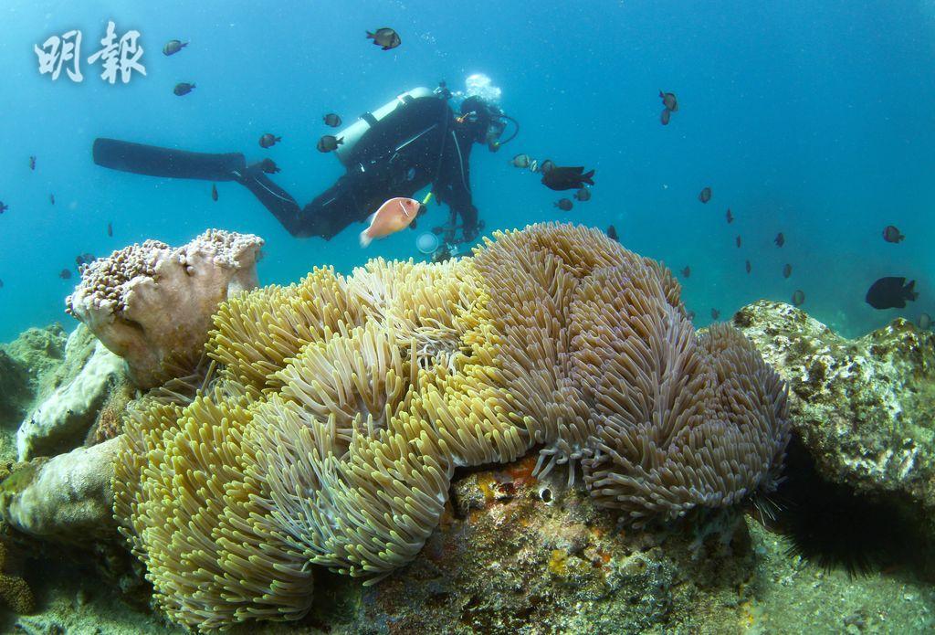 【世界海洋日】多圖!深入海底睇三亞海洋牧場 海洋生物你識幾多?