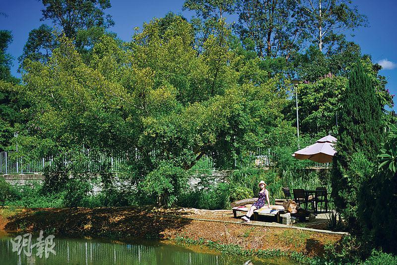 上水河上鄉成打卡勝地 避世觀星新熱點 必到隱世露天茶座「何時.河地」