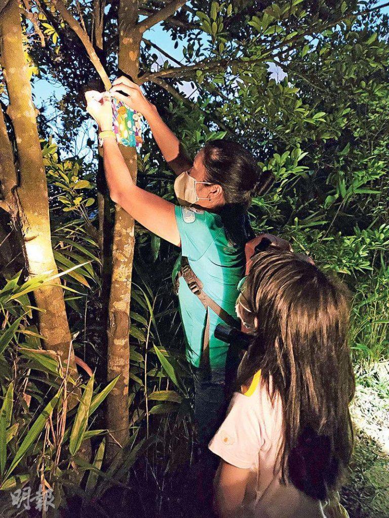 一行人摸黑沿寶馬山「聖貞德中學」步行至金督馳馬徑,教練協助孩子把當日早上親手做的「仙子之門」掛在樹上,延續行山人士的treasure hunting遊戲。(沈雅詩攝)