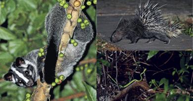 夜行導賞團丨夜行龍虎山另一番體驗 尋找山林中兩棲爬行動物