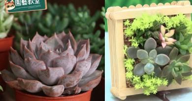 【親子DIY】自製人氣多肉植物畫框 種植3注意 換泥防黴菌昆蟲