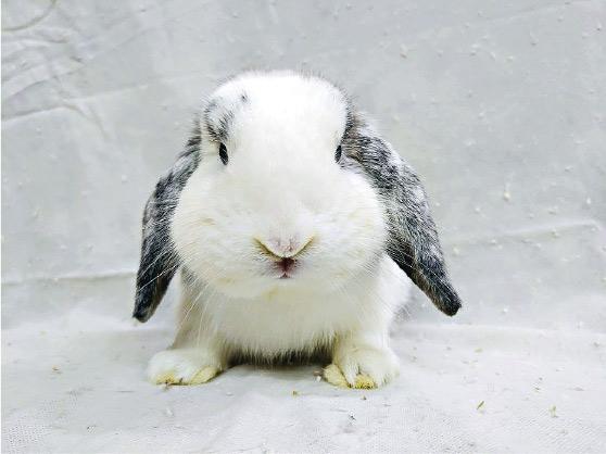 養兔新手必睇!兔仔愛談心按摩 忌抽耳朵 宜耐心學抱抱